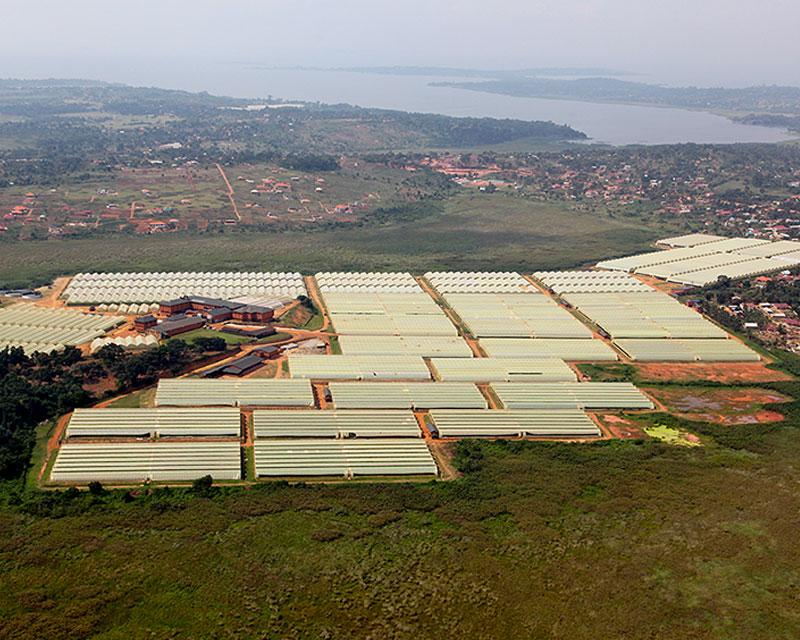 Farm Aerial View