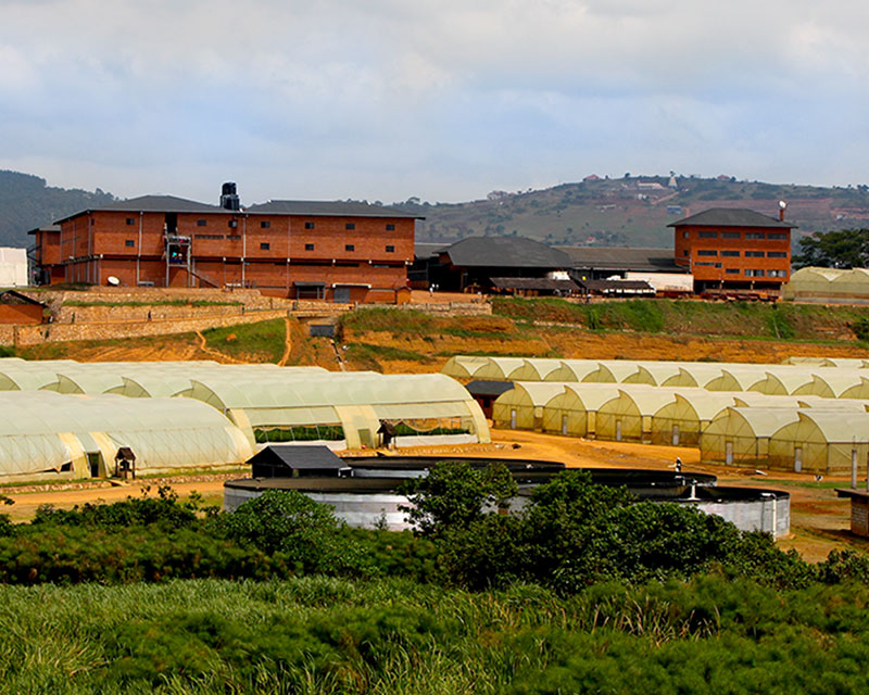 Rosebud Farm